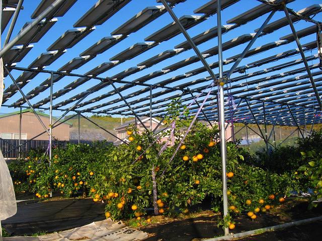太陽光発電 農業.jpg