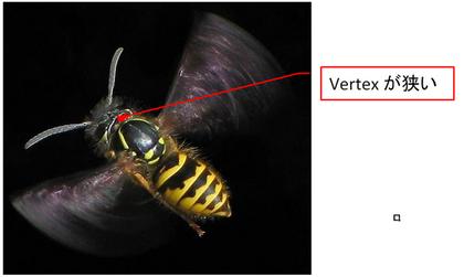 Vertex narrow Vespula 02.png