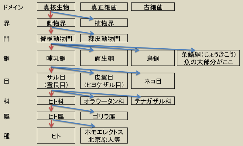classified table in Japanese.PNG