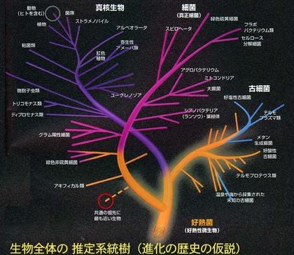 lifephylogeny.jpg